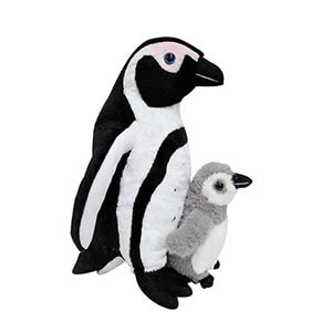 Mother And Baby African Penguin